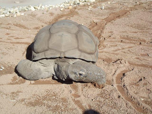 tortuga gigante en mexico