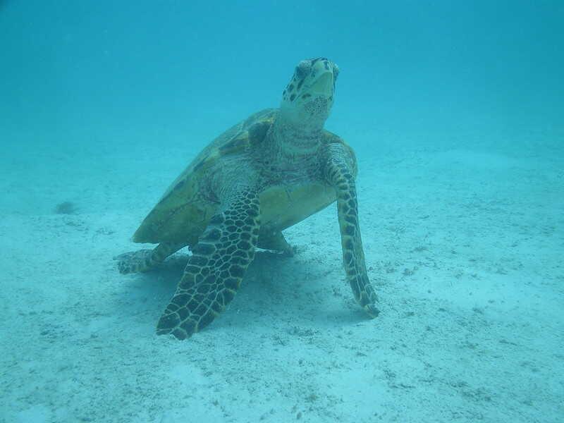 Nadando en mar de caribe