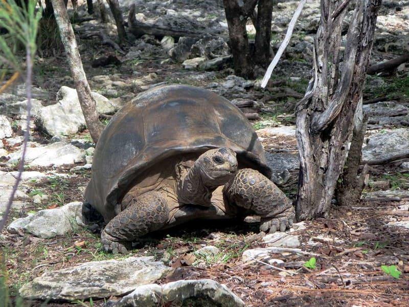 Cuánto dura esta tortuga sin comer - cuidados
