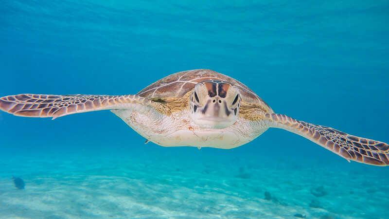 Cuánto mide esta tortuga