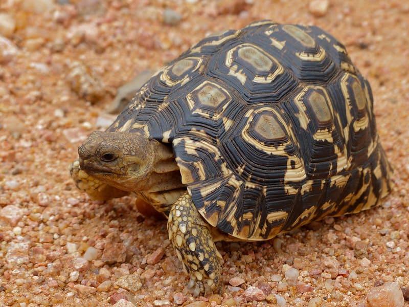 Que come esta tortuga