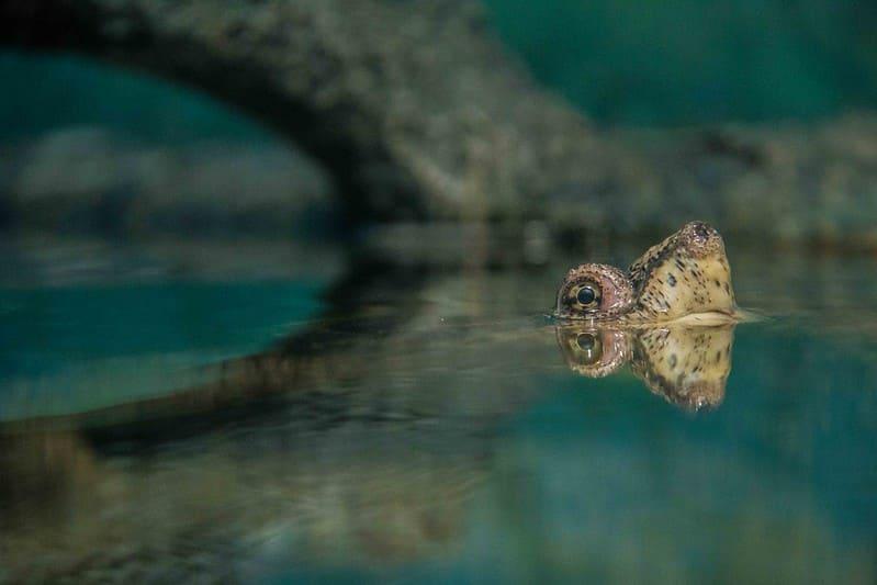 Hábitat de la tortuga MataMata