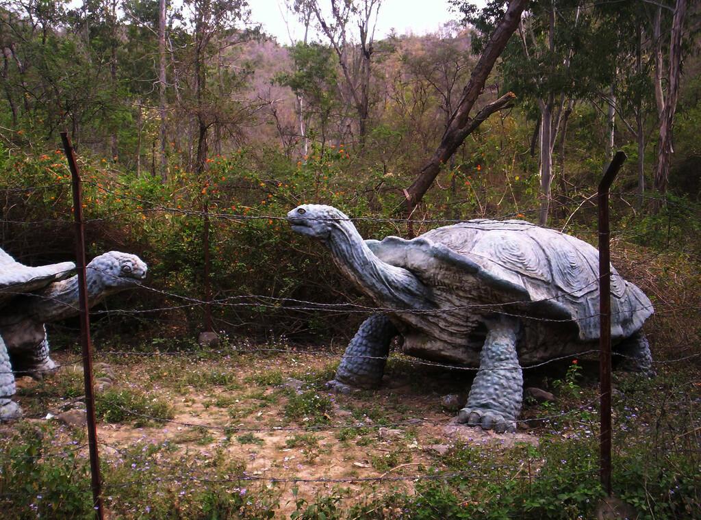 La tortuga atlas (Testudo atlas) Las  tortugas más grandes del  mundo