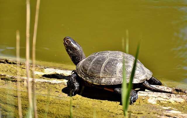 Las principales tortugas de agua
