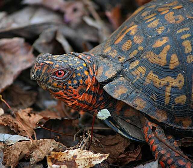 en donde viven las tortugas de tierra