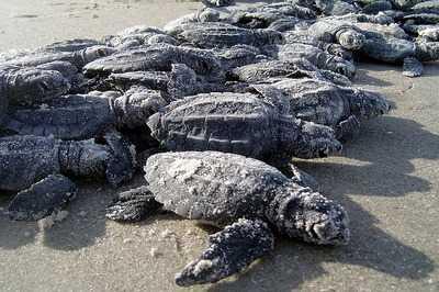 Tortugas marinas y de tierra