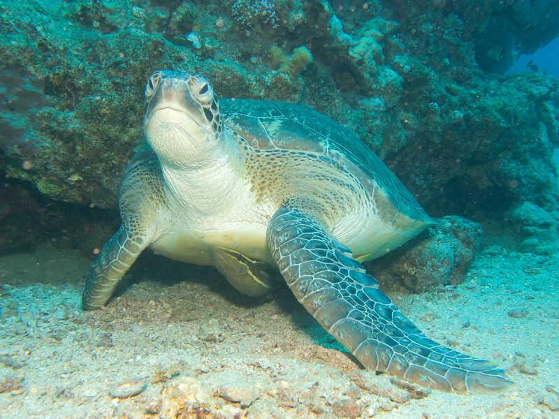Amenazas y peligros de extinción reducen los que pueden vivir