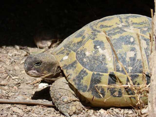 Características de la tortuga europea