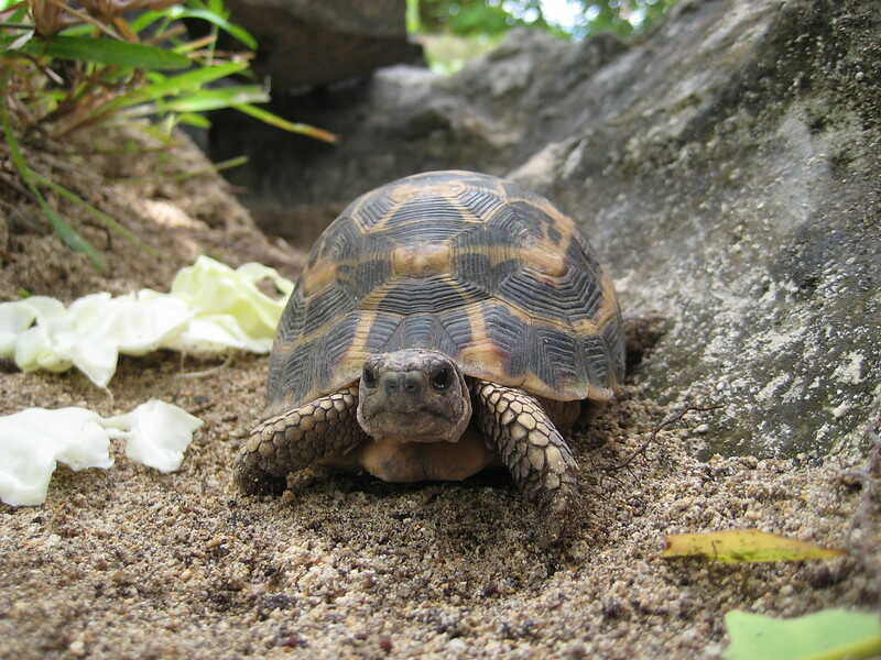 Alimentación de la tortuga araña