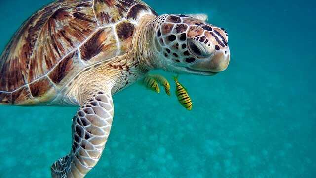 Hábitat de las tortugas