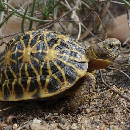 Descripción de la tortuga Geométrica