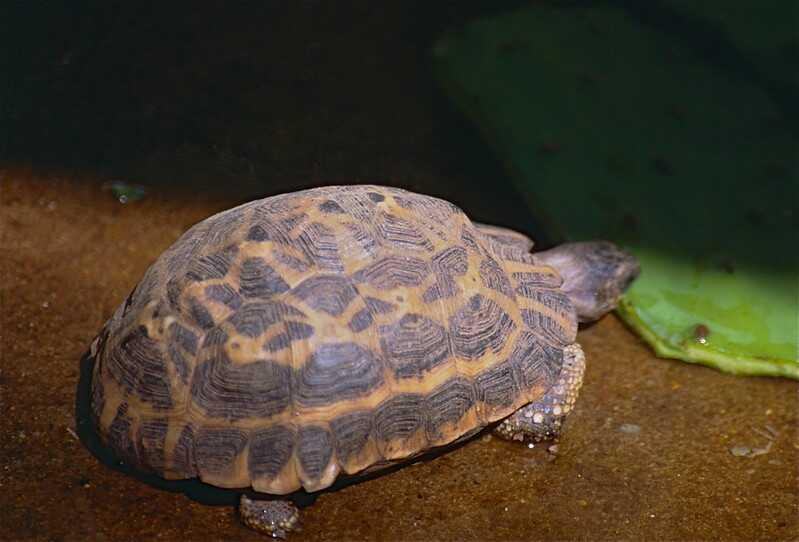 Curiosidades de la tortuga araña