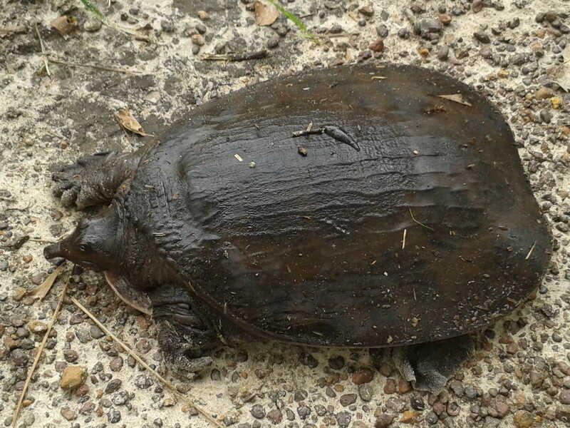 hábitat de esta tortuga
