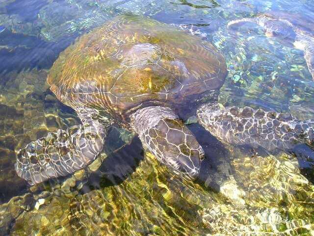 Cómo duermen las tortugas