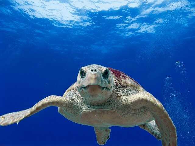 Características de las tortugas