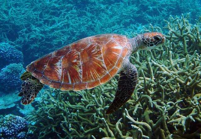 Qúe son las tortugas Marinas