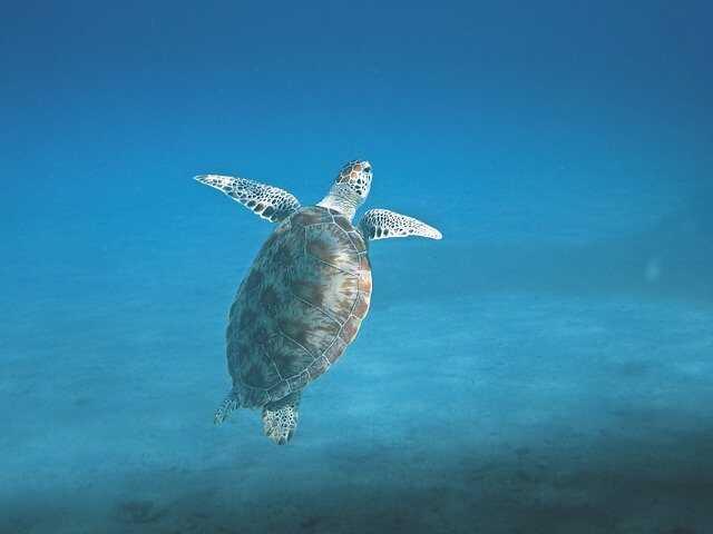 tortugas marinas mediterraneo