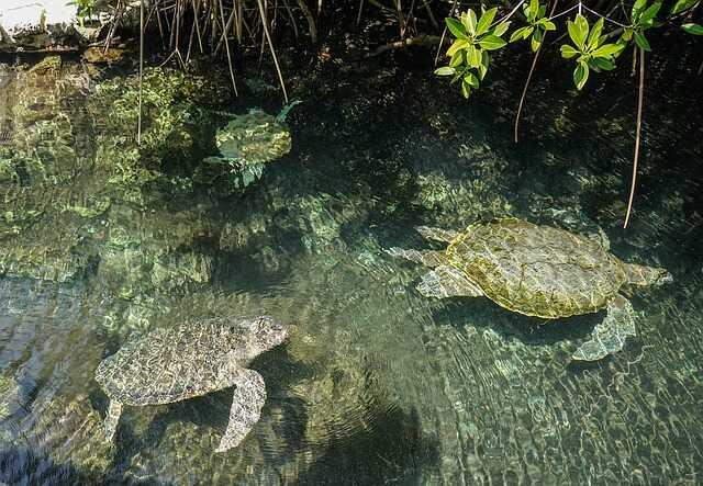 Páises donde viven las tortugas Marinas