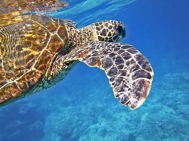 Alimentación de las Tortugas Marinas