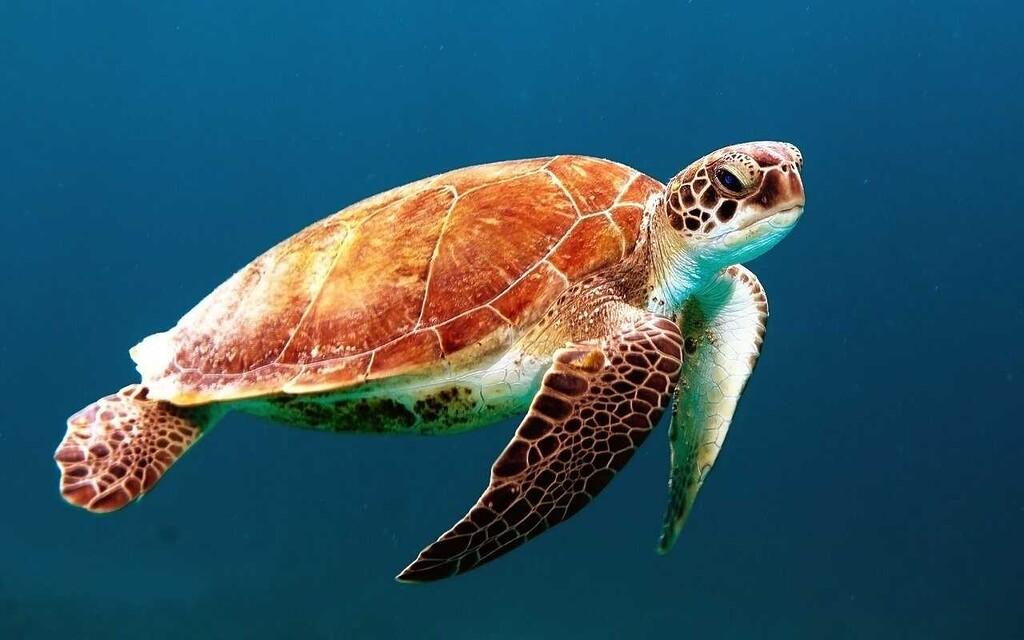 Tortugas Marinas, de tierra y agua